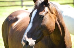 Horse Ownership Principles